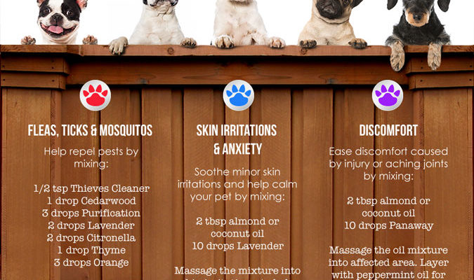 Essential Oils for Dog Lovers, Furry Friends,